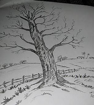 The Tree Drawing by Naveen Gopinath