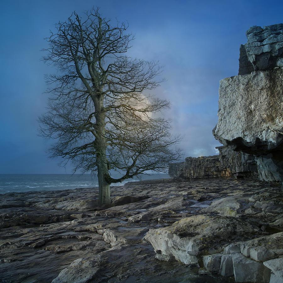Ireland Digital Art - The Tree Of Inis Mor by Betsy Knapp