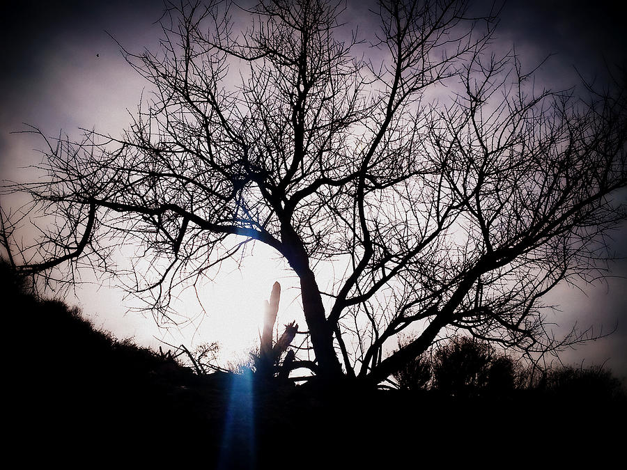 Tree Photograph - The Tree Of Wisdom by Nature Macabre Photography