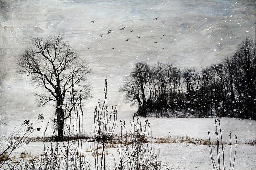 Tree Photograph - The Tree by Stephanie Calhoun
