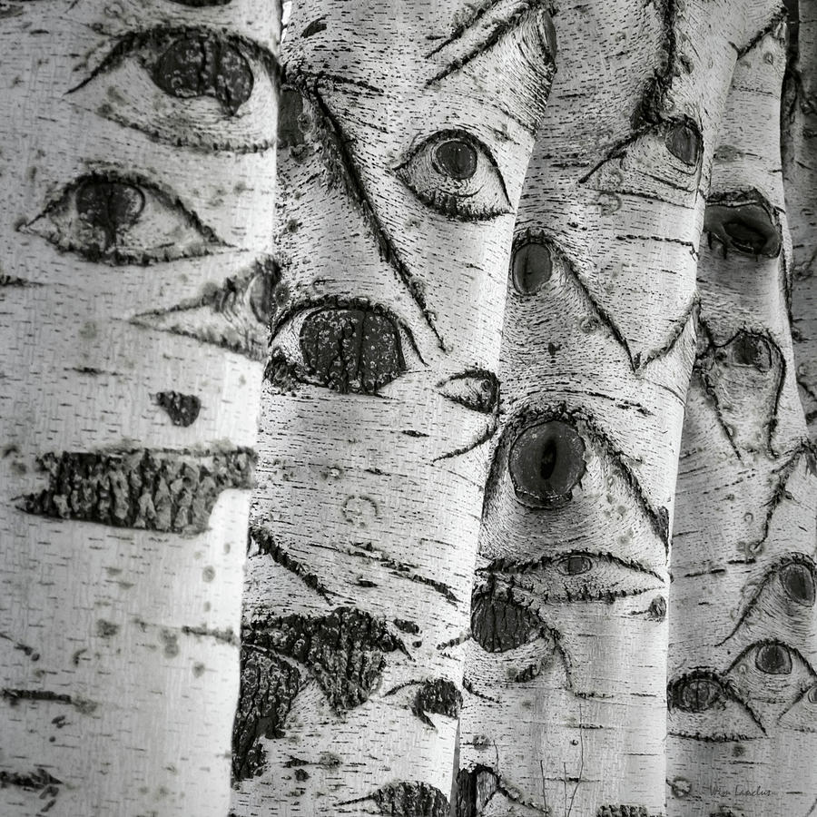Image result for tree of eyes