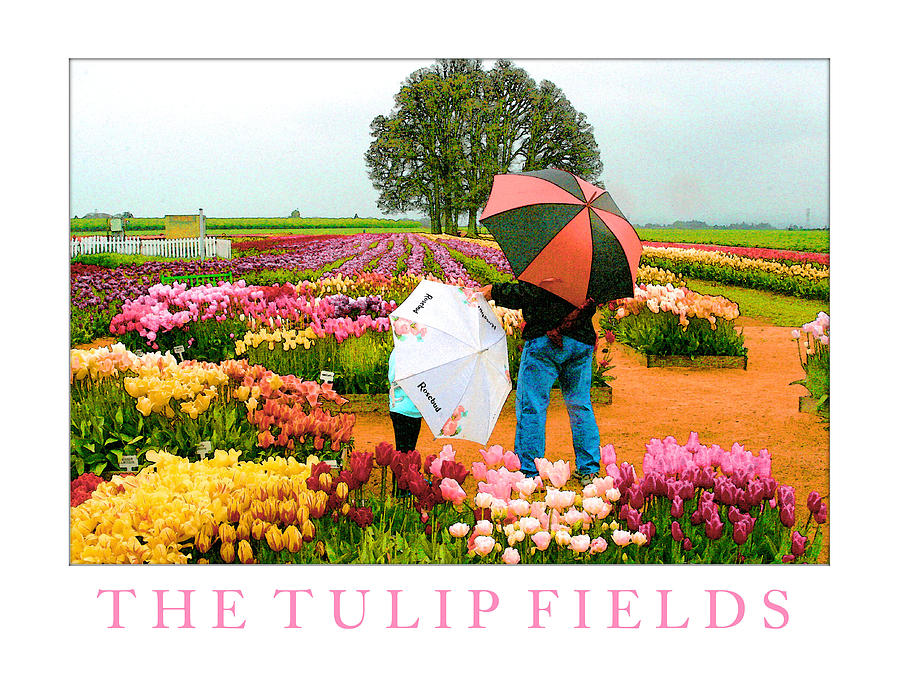 Tulip Fields Photograph - The Tulip Fields by Margaret Hood