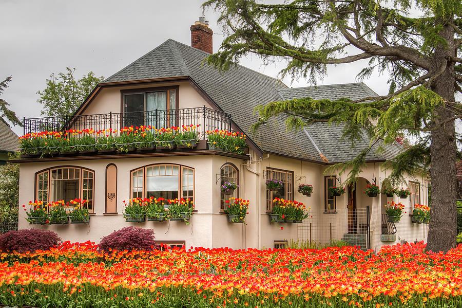 The Tulip House Photograph