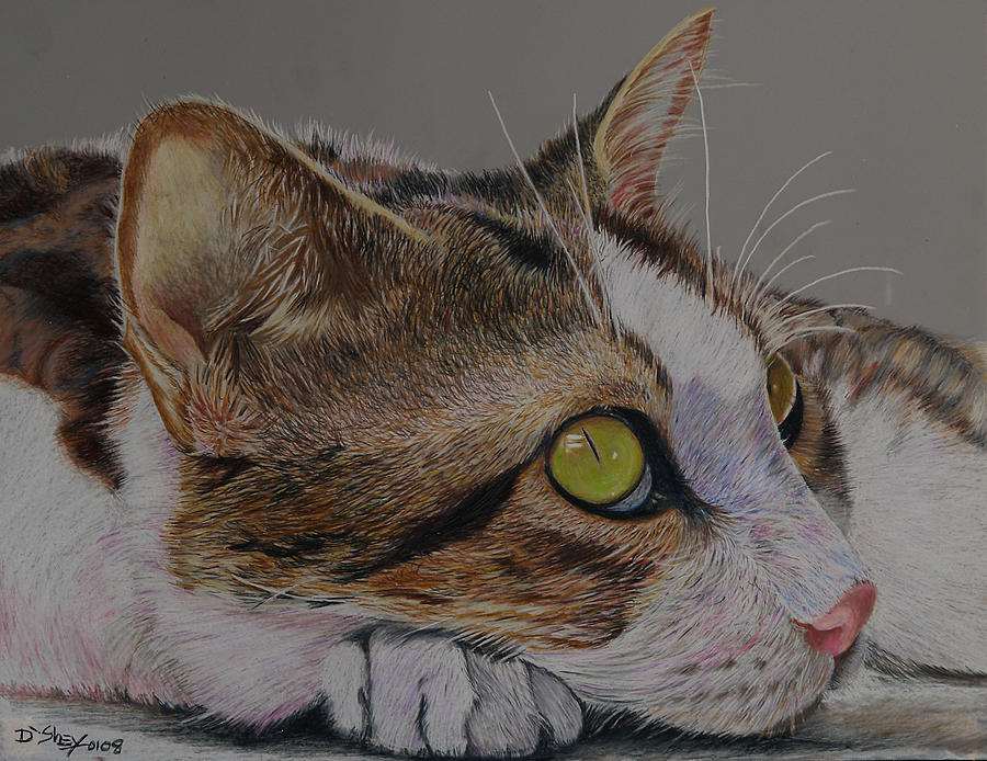 Cat Painting - The Ultimate Pose by Don MacCarthy