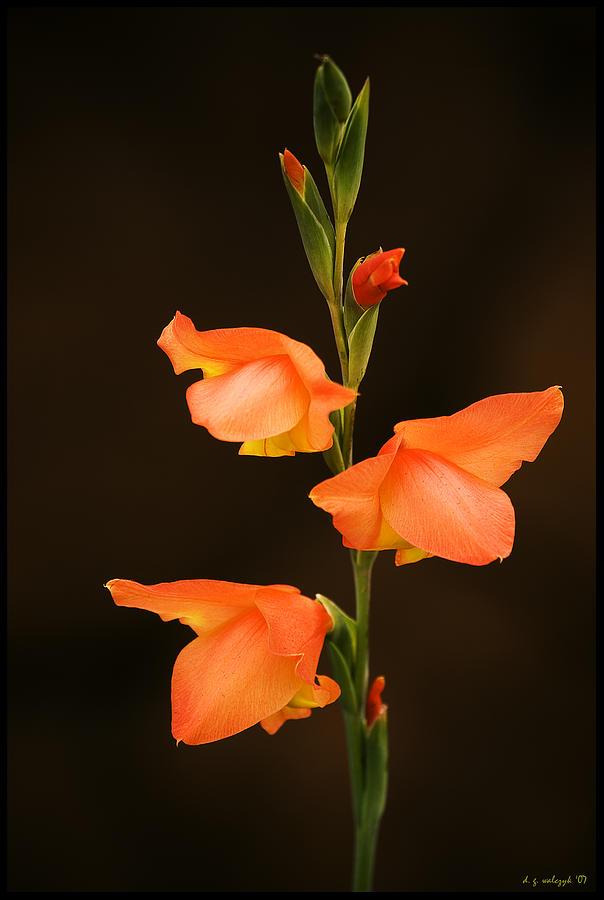 Flora Photograph - The Unvanquished by Daniel G Walczyk