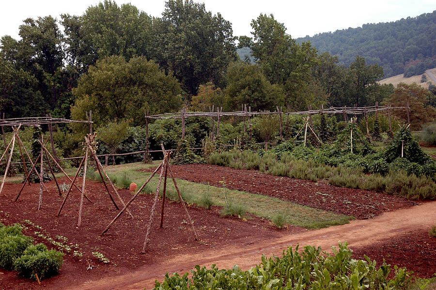 Usa Photograph - The Vegetable Garden At Monticello II by LeeAnn McLaneGoetz McLaneGoetzStudioLLCcom
