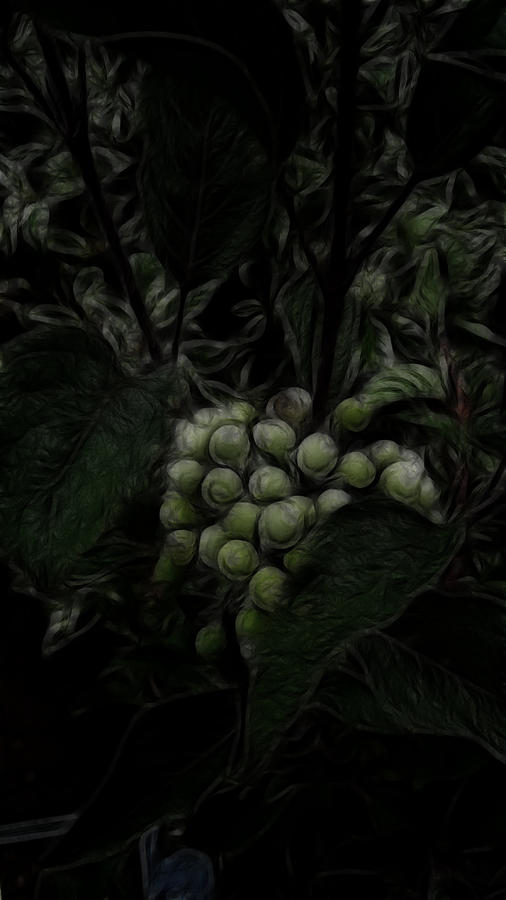 Grape Photograph - The Vineyard by Bobbie Barth
