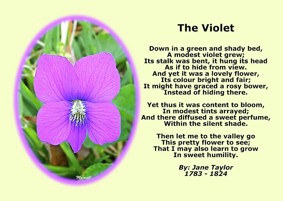 The Violet Photograph - The Violet Classical Wildflower Nature Poetry By Jane Taylor by Maxwell