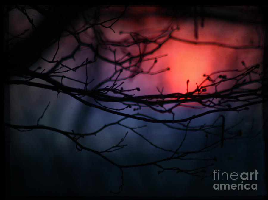 Sunset Photograph - The Warm Light by Angel Ciesniarska