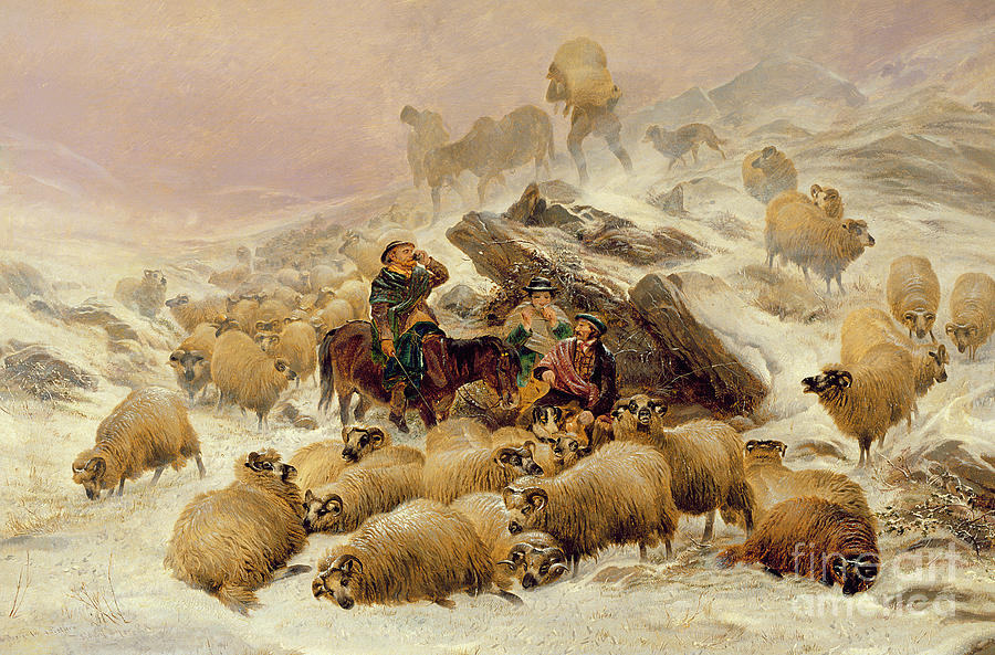Sheep Painting - The Warmth Of A Wee Dram by TS Cooper