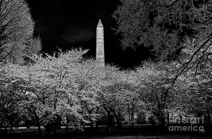 Washington Monument Photograph - The Washington Monument At Night by Lois Bryan