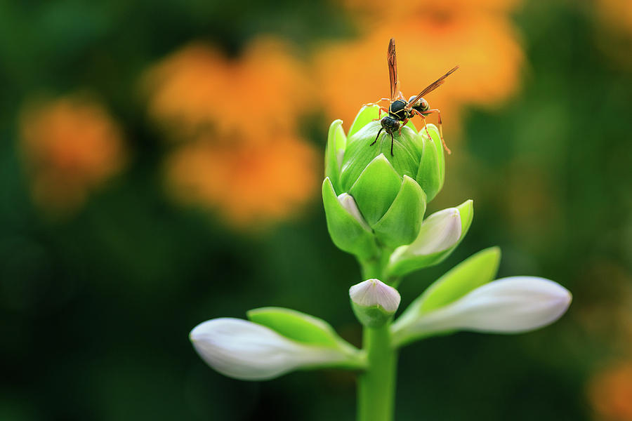 The Wasp and the Hosta by Joni Eskridge