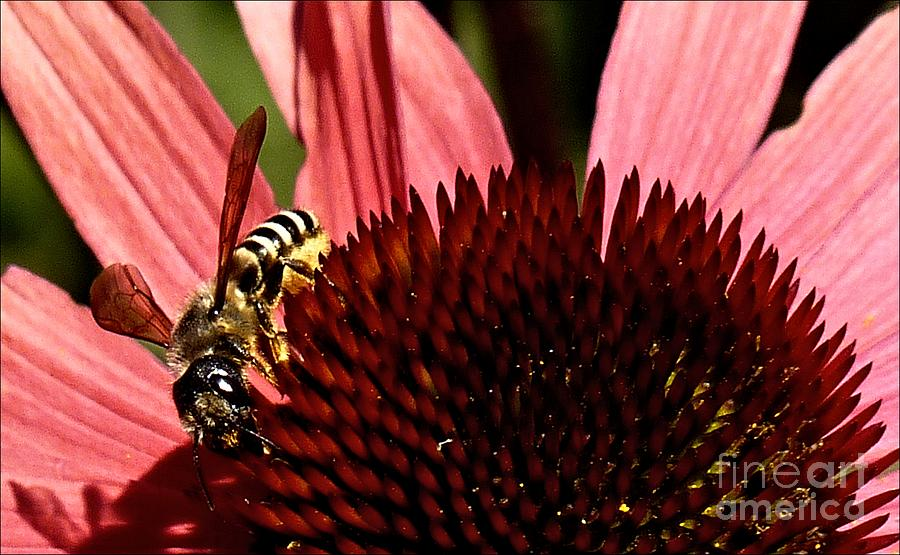 The Wasp by Julia Hassett