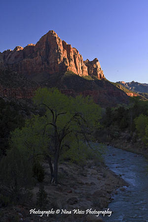 Watchman Photograph - The Watchman I At Zion National Park by Nina Weiss
