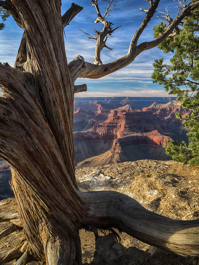 The Watchman by Rob Wilson
