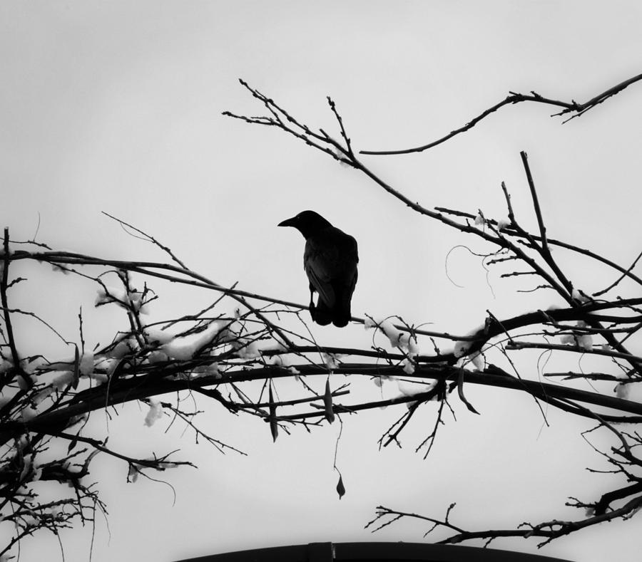 Vrana Photograph - The Watchman by Vail Joy