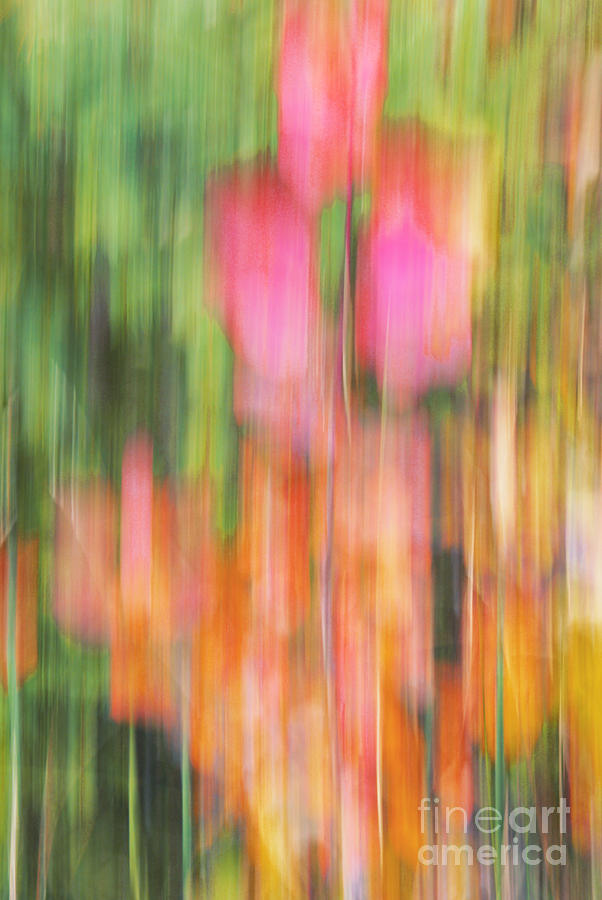 Abstract Photograph - The Watercolor Garden by Aimelle