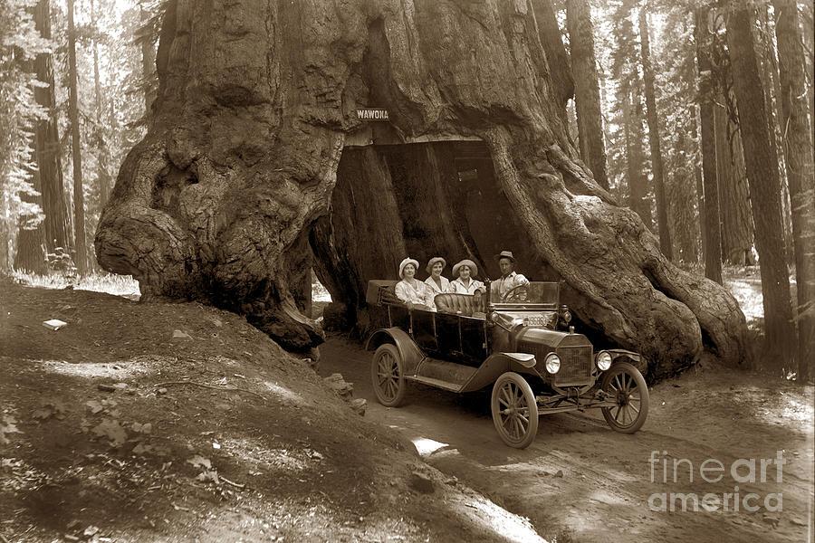 Mariposa Grove Photograph - The Wawona Tree Mariposa Grove, Yosemite  Circa 1916 by California Views Archives Mr Pat Hathaway Archives
