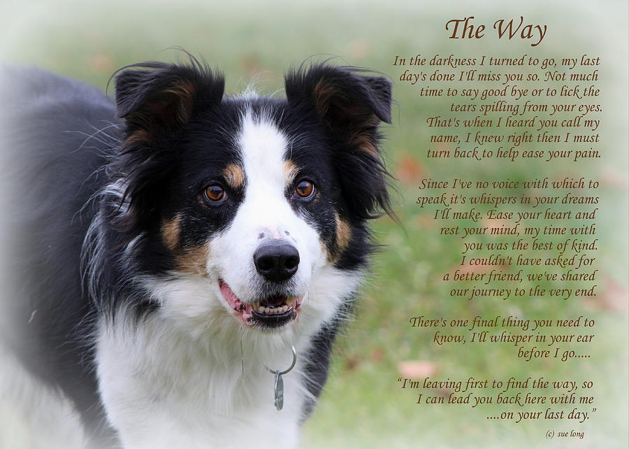 The Way Border Collie Photograph by Sue Long