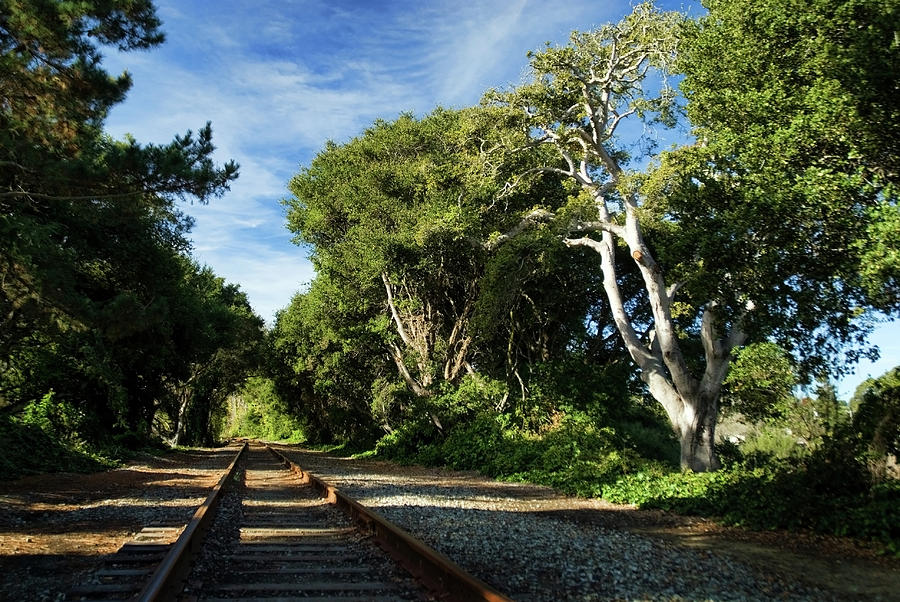 California Photograph - The Way by Wayne Stadler