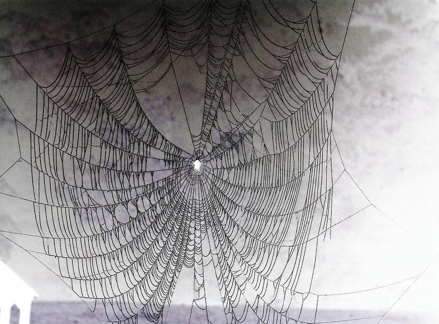 Spider Photograph - The Web We Weave by Margaret Hamilton