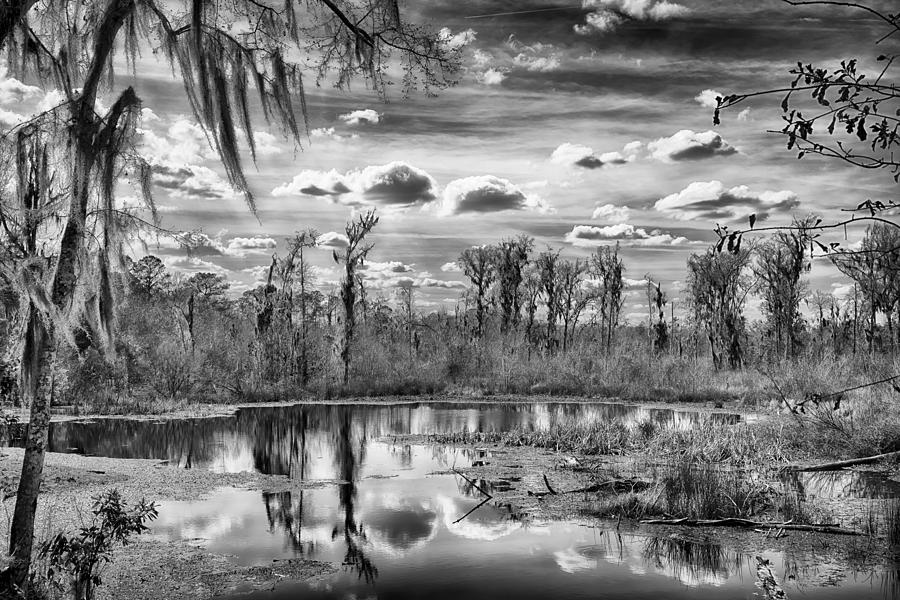 Nature Photograph - The Wetlands by Howard Salmon