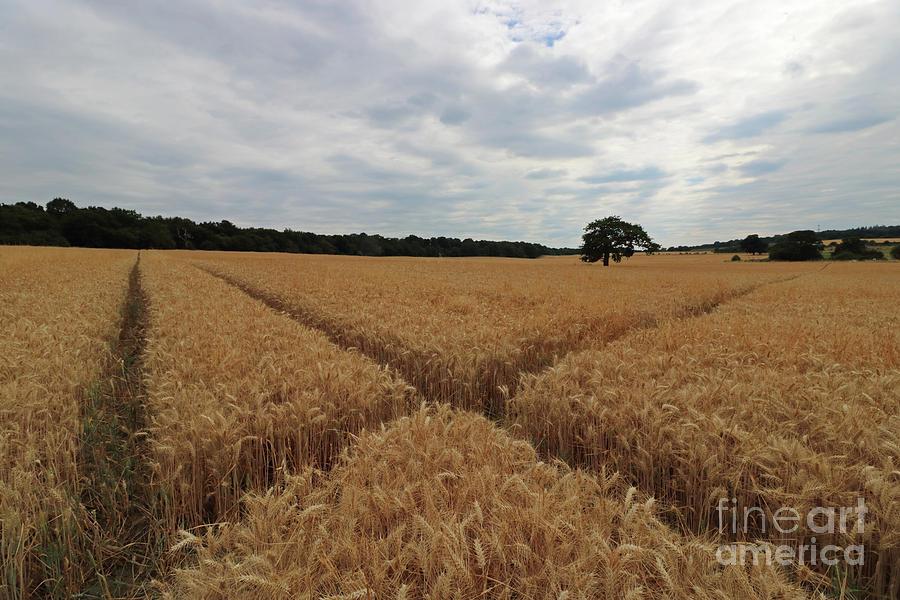 The wheat cross by Julia Gavin