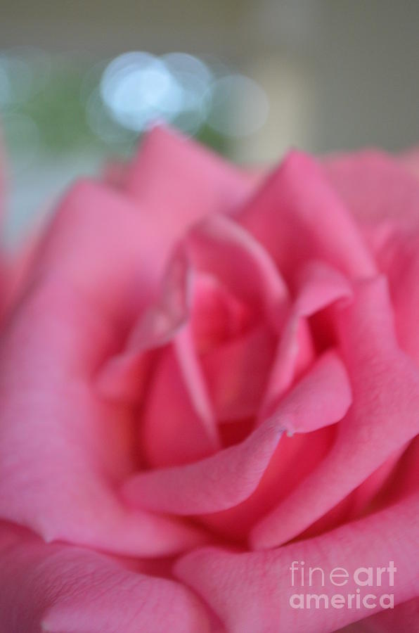 Digital Photograph Photograph - The Whisper Of A Rose by Eva Maria Nova
