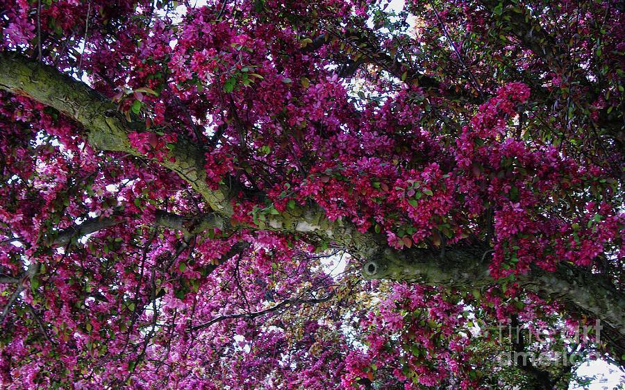 Photo Photograph - The Whistling Tree Limb by Marsha Heiken