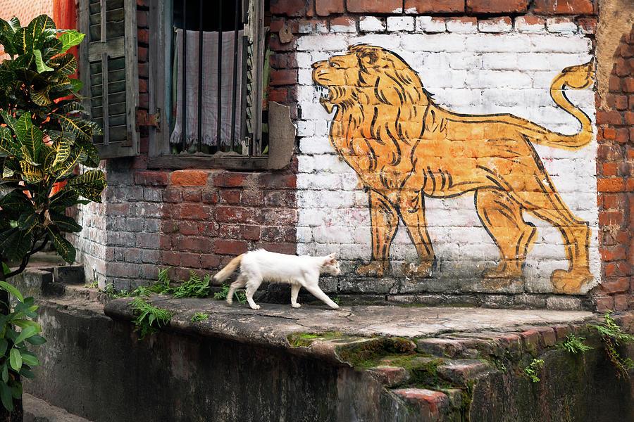 Bengali Photograph - The White Cat by Marji Lang