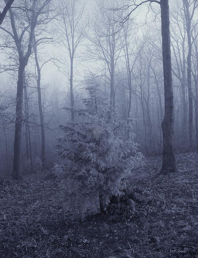 The White Tree Photograph by Alana  Schmitt