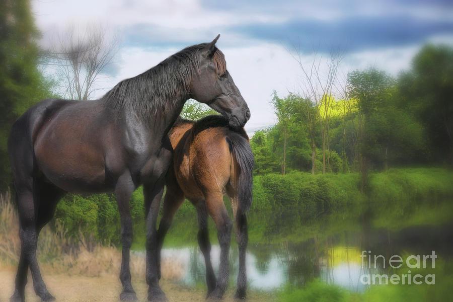 The Wild Horses Of La Chura Trail Photograph
