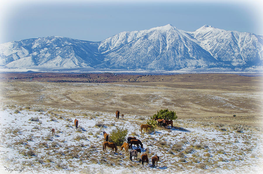 Wild Horses Photograph - The Wild Horses Of The Carson Valley by Mary Cioffi