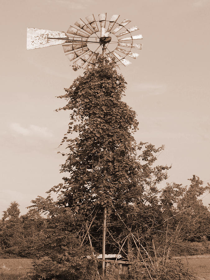Trees Digital Art - The Windmill by Audrey Venute