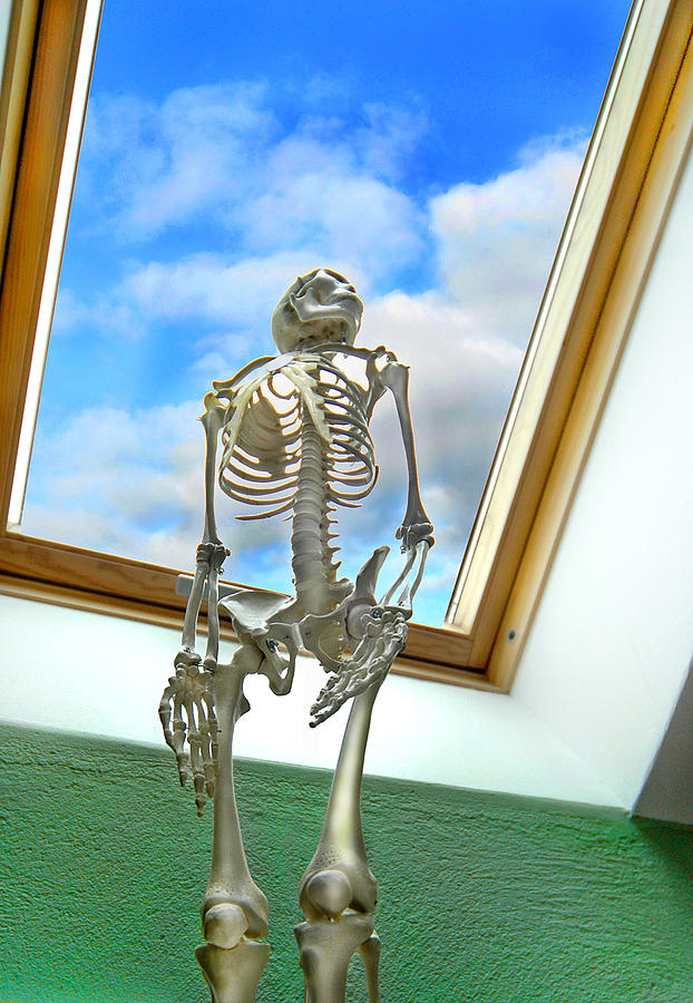 Skeleton Photograph - The Window by Robert Lacy