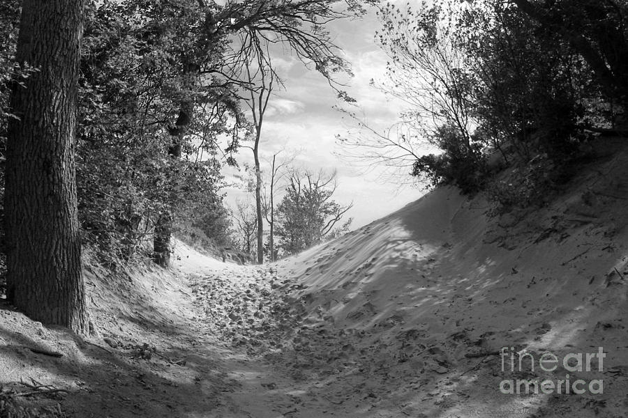 Black And White Photograph - The Windy Path by Cathy  Beharriell
