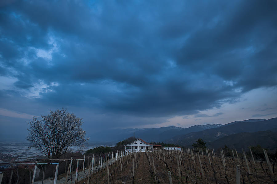 Clouds Photograph - The Wineyard by Jonas Sundberg