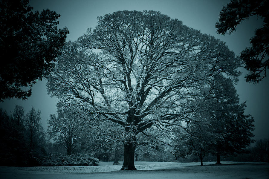 Landscape Photograph - The Winter Tree by Kristy Creighton