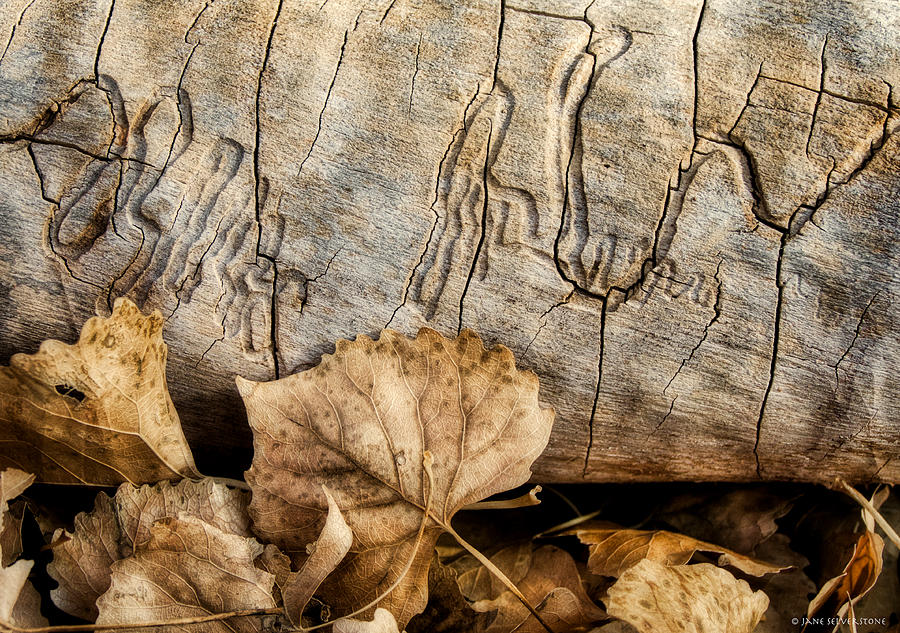 Nature Abstract Photograph - The Wood Borers Signature by Jane Selverstone