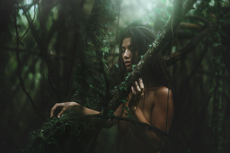 Forest Photograph - The Woods by TJ Drysdale