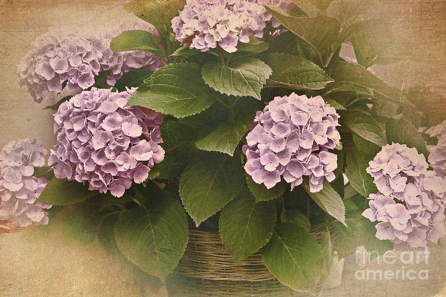 Hortensia Photograph - The World Of Hydrangeas by Dania Reichmuth