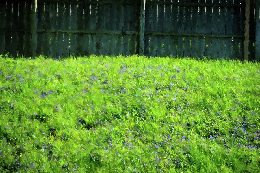 The Yard 1 Photograph