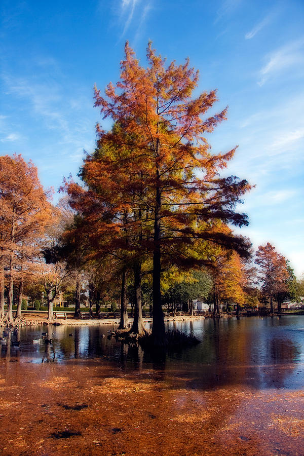 Autumn Photograph - Theta Pond by Lana Trussell