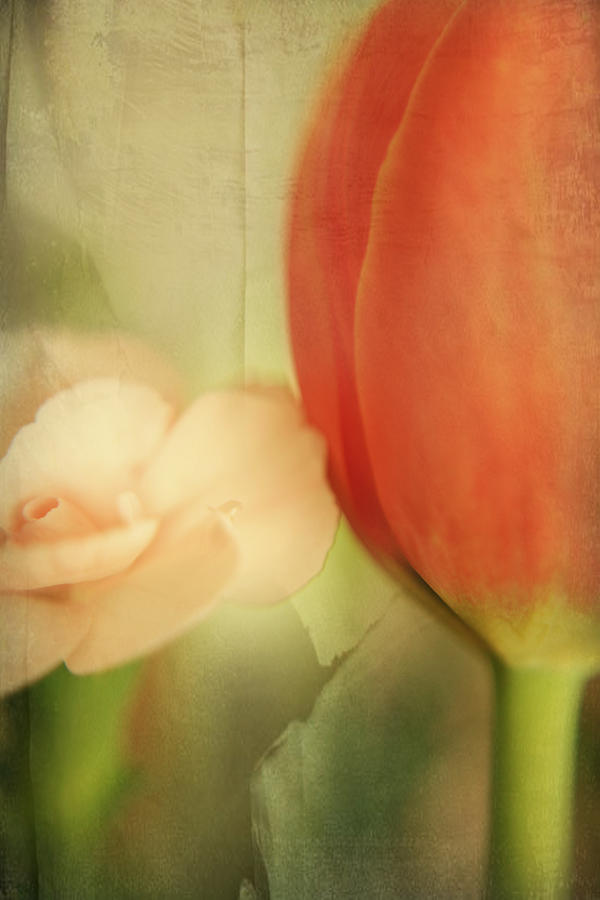 Flowers Photograph - They Could Never Tear Us Apart by Laurie Search