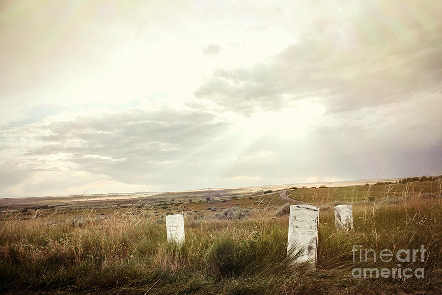 Landscape Photograph - They Stand Alone by Sandy Adams