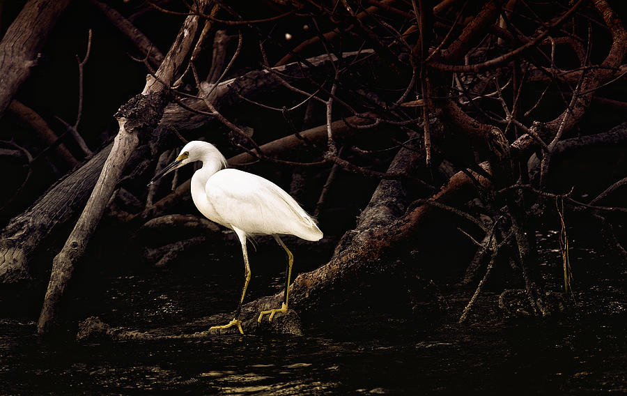 Egret Photograph - Thicket by Joel P Black