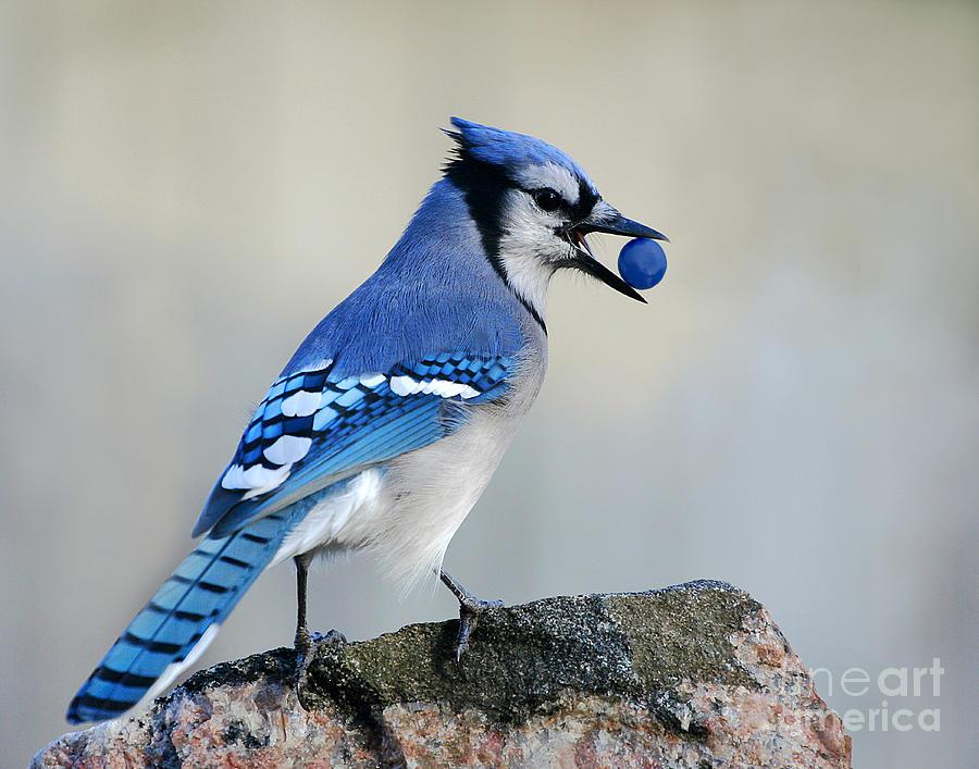 Bird Photograph - Thief Of Sweets by Jan Piller