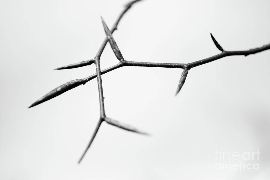 Dry Photograph - Thin by Gabriela Insuratelu