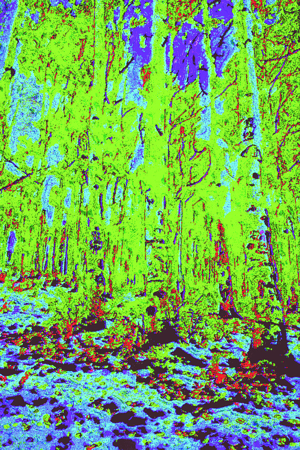 Thin Trees D4 Digital Art by Modified Image
