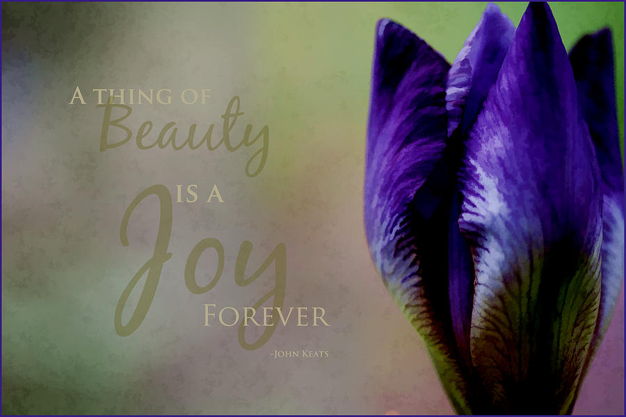 Inspirational Photograph - Thing Of Beauty by Bonnie Bruno